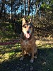 Maxwell - 1/19/2015 - for foster