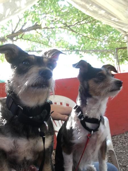 Simon  & Sadie  - 5/6/17 - Michelle Guillot