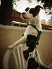 Sadie Pup- 05/25/14 - Steve Garcia