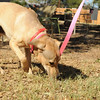 "Gentle. Does not pull leash. easy going.<br /> 9.5.2011<br /> photo:Tahila Mintz  <a href=""http://www.shireemimaging.com"">http://www.shireemimaging.com</a>"