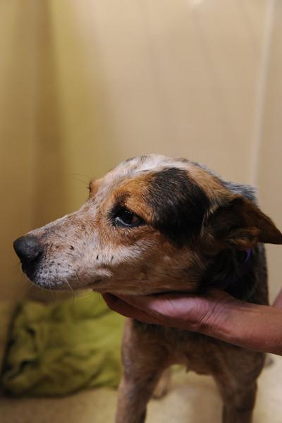 """9.5.2011<br /> photo:Tahila Mintz  <a href=""""http://www.shireemimaging.com"""">http://www.shireemimaging.com</a>"""