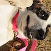 "Sweet.Loves Belly Rub.Gentle.Loving<br /> 9.5.2011<br /> photo:Tahila Mintz  <a href=""http://www.shireemimaging.com"">http://www.shireemimaging.com</a>"