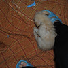 Parvo - Hunee Day 4 - she wanted to lean up on me so badly but I was holding the camera! - Shorey russell