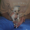 Parvo - Hunee getting IV injection - shorey russell