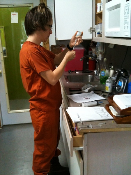 Parvo - Parvo technician draws up meds to give to Hunee on her first day of treatment - Shorey Russell