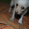 Parvo - Hunee Day 4 - she is a bit skeptical of the camera - shorey russell