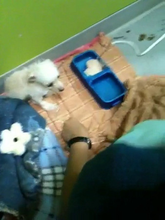 Parvo - Hunee gets Ampicillin injection - shorey russell
