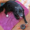 Moby - 8/2/2010 - Sally Crewe
