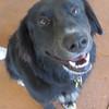 Moby - 7/31/10 - Sally Crewe