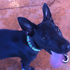Bugsy - 8/3/10 - Sally Crewe