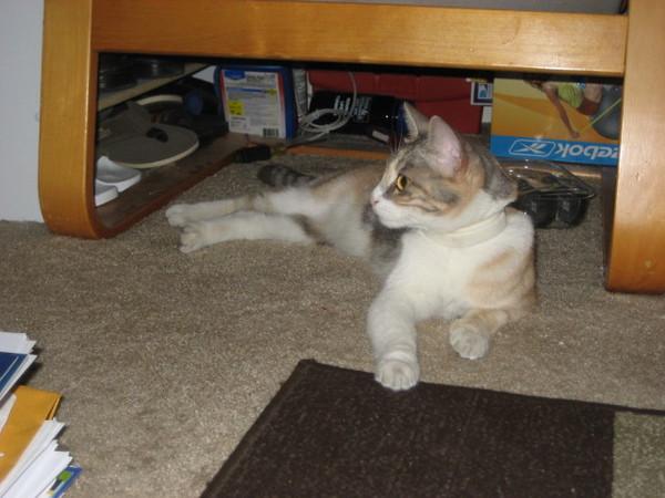 Graysons_Cat012
