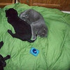 we like the kitty