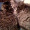 Barnaby and Mordi
