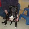Found Female 3/17/09 tanglebriar trail    Call 335-7973