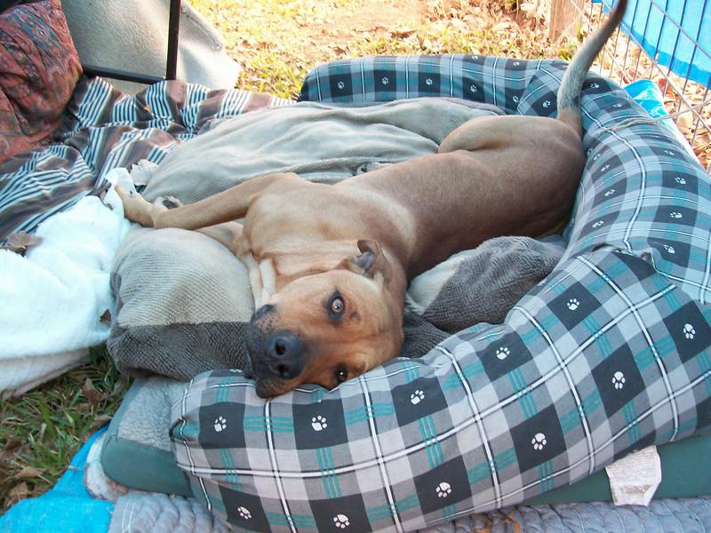 Nicholas_A531609 Found dog