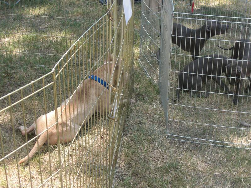 Fifi investigates the puppies