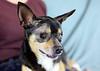 Photo Day 2 - Senior Dogs - Sandy L. Stevens