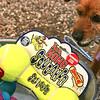 Pet Expo - 06/12/2011 - Summer Huggins (Leo)