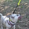 Pet Expo - 06/12/2011 - Summer Huggins (Mimi)