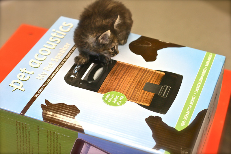 Pet Expo - 06/12/2011 - Summer Huggins