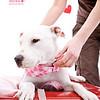 Pearl, 2/12/11, Angela Lozano