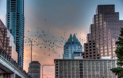 austin-skyline-bats-2-1-2
