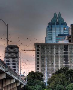 austin-skyline-bats-2