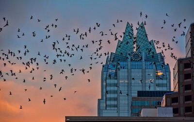 austin-skyline-bats-1-2
