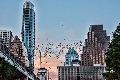 congress-street-bats-2-4