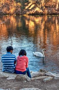 couple-creek-swan