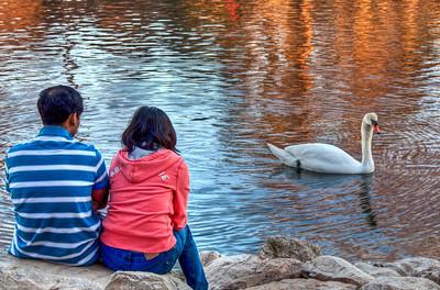 couple-creek-swan-2