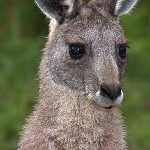 Australia, March-April 2011