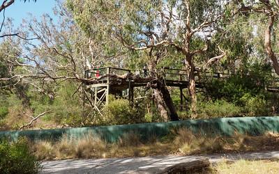 Koala barrier