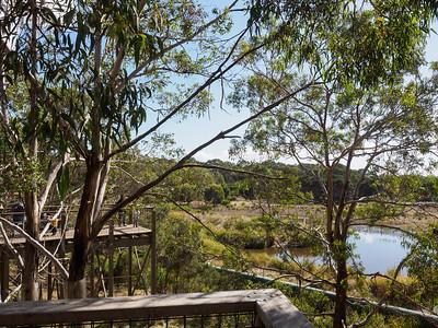 Koala Conservation Centre - Phillip Island Nature