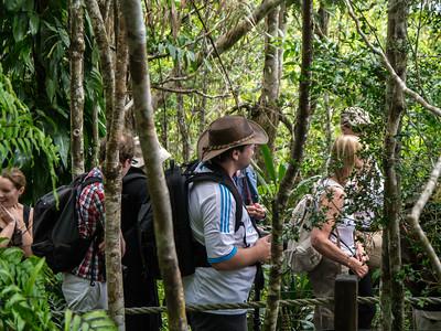 Skyrail Rainforest