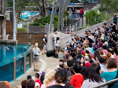 Taronga Zoo seal show