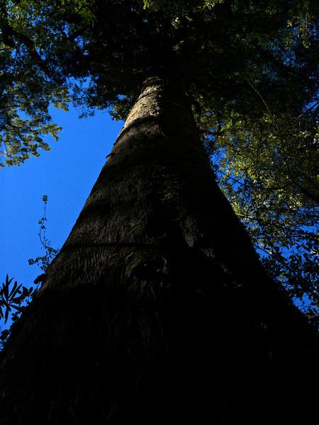Humboldt Falls trail