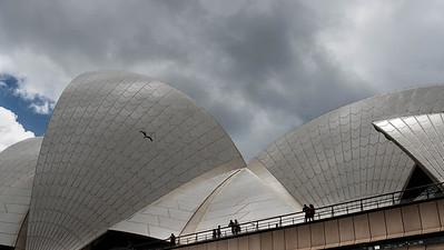 Bird Across the Opera House