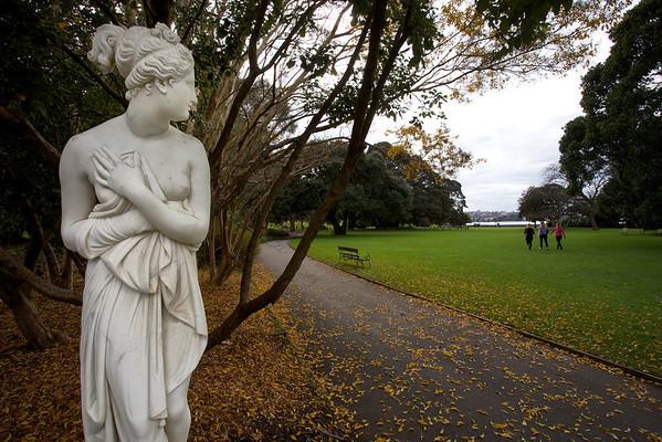 Modest damsel, Sydney Botanical Gardens