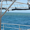 After a boat ride and lunch on the boat, we arrived at the Great Barrier Reef.  The green against the blue is the Reef.