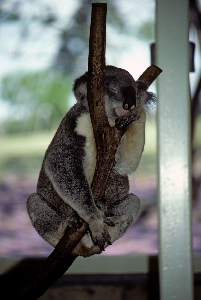 Australia-Brisbane-Hayman_Island-025