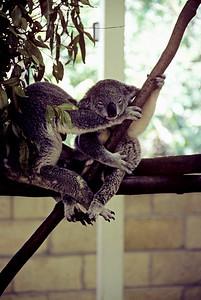 Australia-Brisbane-Hayman_Island-026