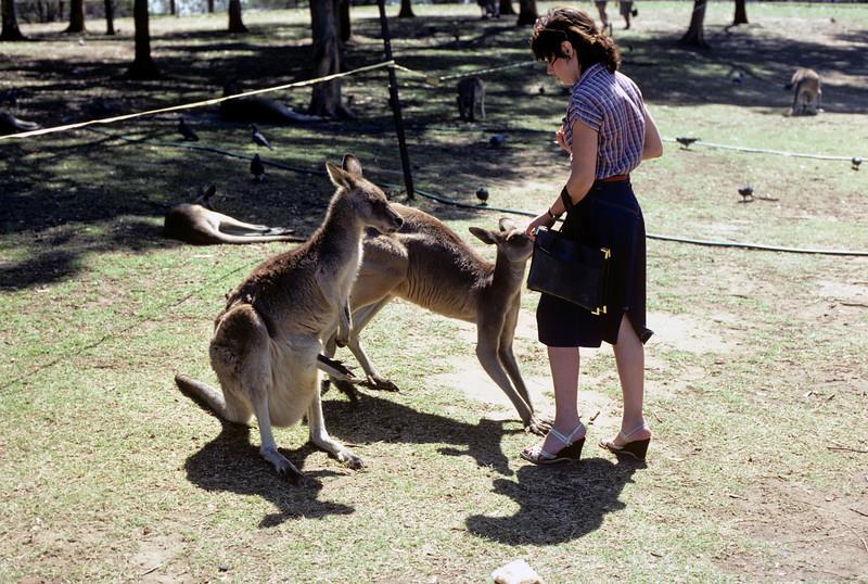 Australia-Brisbane-Hayman_Island-037