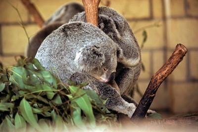 Australia-Brisbane-Hayman_Island-021