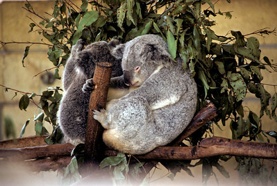 Australia-Brisbane-Hayman_Island-023