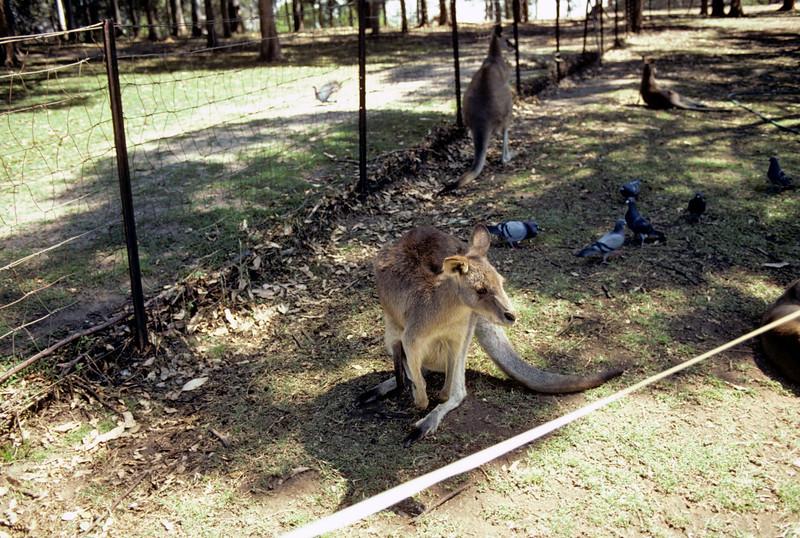 Australia-Brisbane-Hayman_Island-038