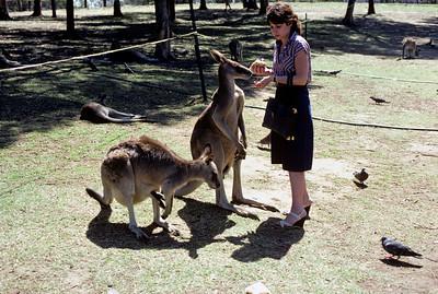 Australia-Brisbane-Hayman_Island-036