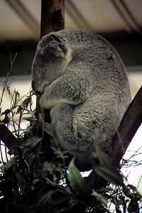 Australia-Brisbane-Hayman_Island-027