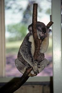 Australia-Brisbane-Hayman_Island-028