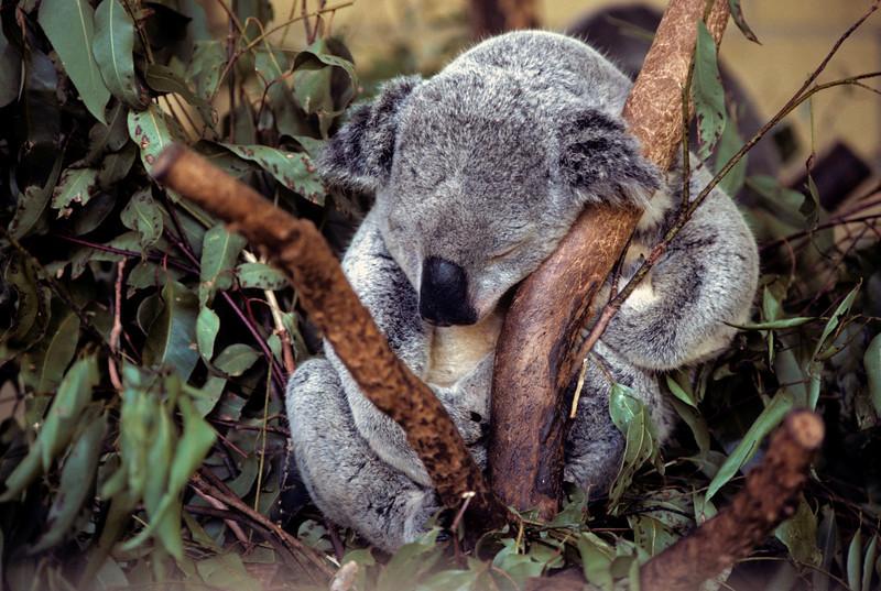 Australia-Brisbane-Hayman_Island-022